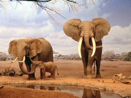 SudAfrica - elefanti